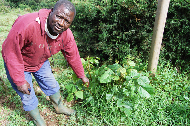 Boniface Litika with baby erythrina tree