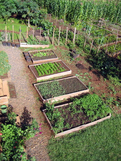 The young raised bed garden as seen from the HIC balcony. The area behind the beds will be planted with sweet corn and timed so that the ears are ripe when residents return in the fall.