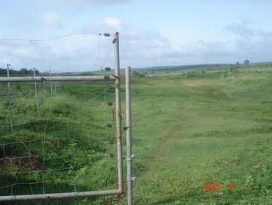 The new solar electric fence at the Energy Farming plantation site.